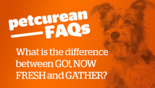 FAQ - what is the different between go, now fresh and gather