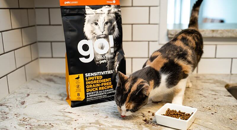 Cat eating Novel Proteins for Cats food on counter