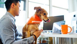 Things to Consider Before You Take Your Dog to Work