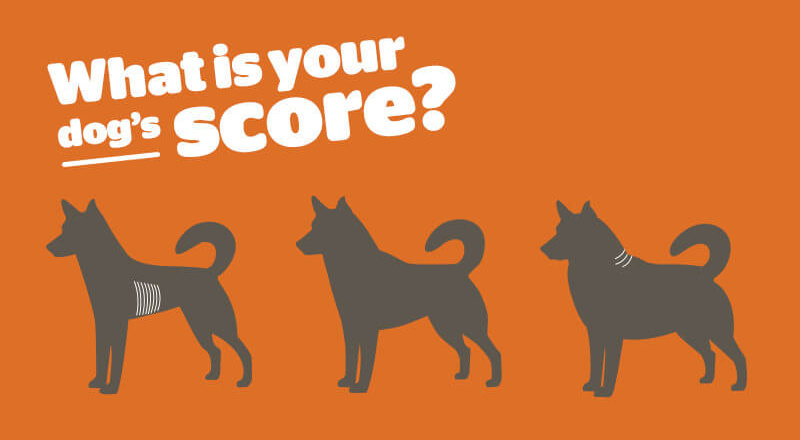 What is your dog's score?