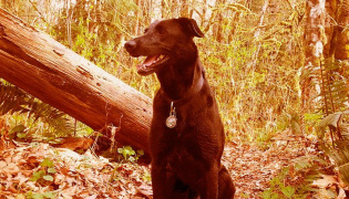 A black dog sitting in a forest