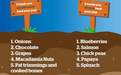 List of foods you should and shouldn't feed your pet