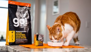 A Guide to Choosing the Right Food for Cats