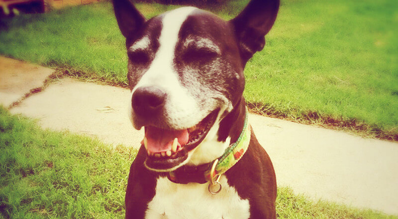 Treating Dog Constipation Naturally