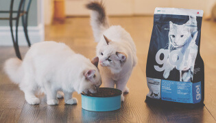 Choosing the Right Food Cat