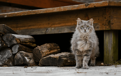 What Are Feral Cats?