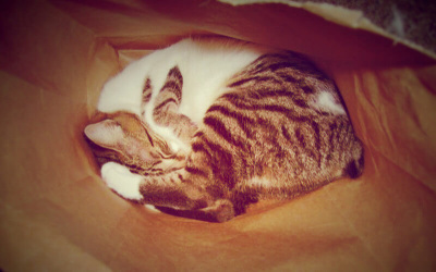 Cat curled in a ball