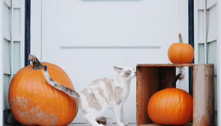 Halloween Hazards For Your Pet