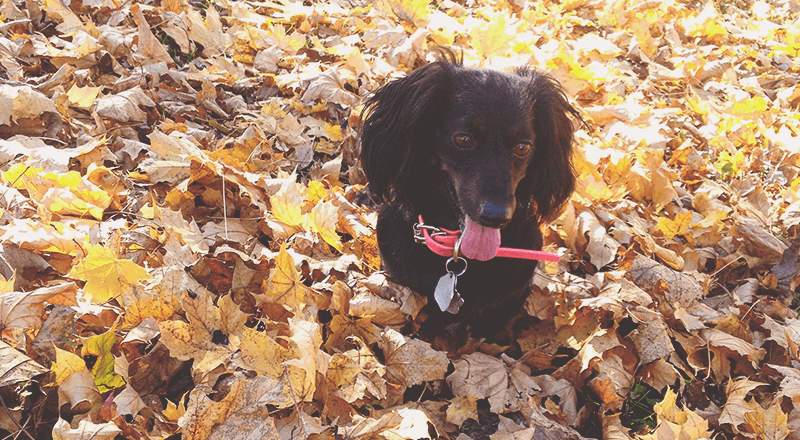 dog in fallen leaves
