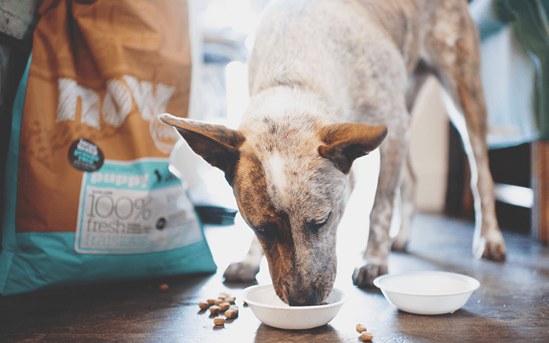 How to Feed a Large Breed Puppy