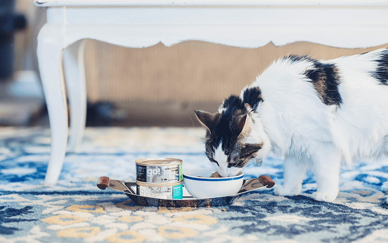 Cat Eating Canned Food