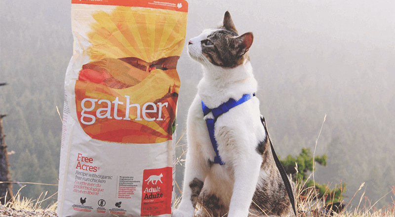 Cat with Gather