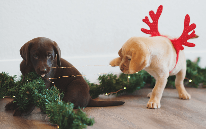 Holiday Dogs