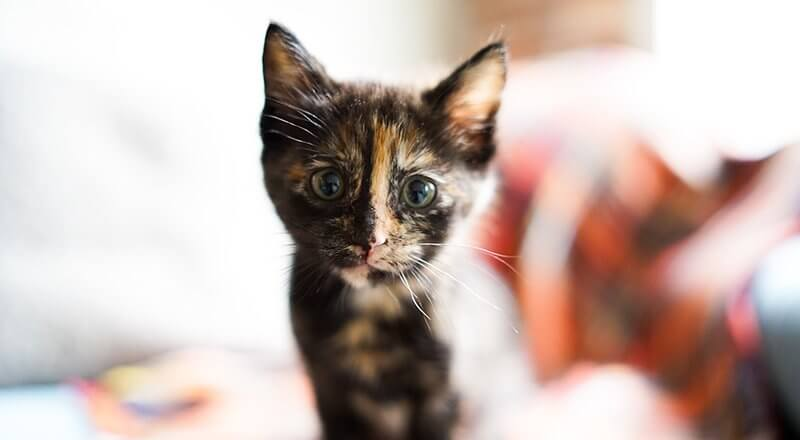 Reasons You Should Spay or Neuter Your Cat