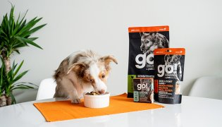 Help! How Do I Feed Kibble, Wet Food and Meal Mixers to My Pet?