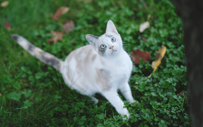 The Unique Nutrient Requirements of Cats