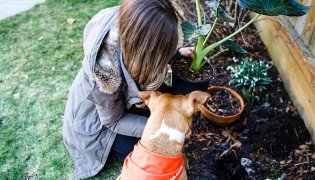 Eco-Friendly Tips for Pet Owners