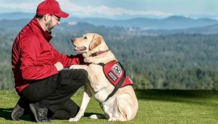 A Day in the Life of a Service Dog