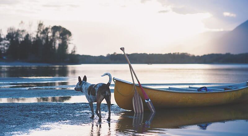 8 Tips for Boating With Your Dog