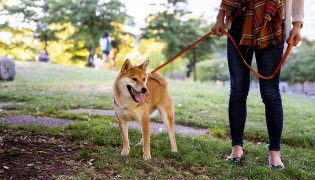 Everything You Need to Know About Fostering a Dog