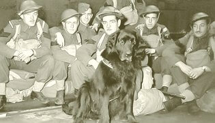 Gander - Canadian war dog hero