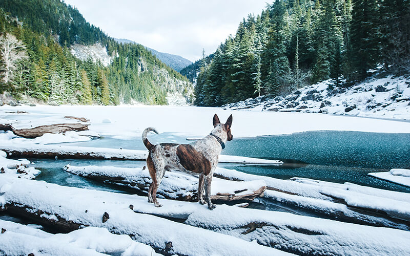 Winter Camping with Your Dog | Petcurean Pet Nutrition