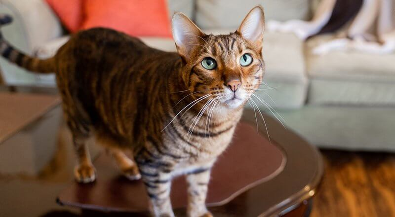 Adopting a Cat With Medical Issues