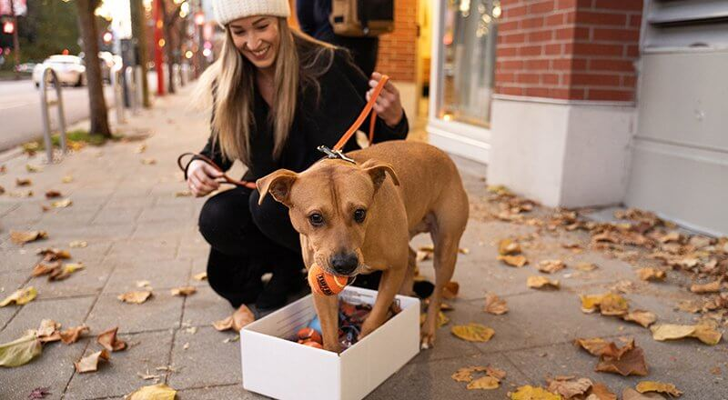 Giving to Your Local Pet Rescue