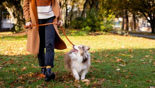 Time to Prep Your Pets for Cooler Weather