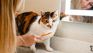 Caring for Your Cat's Teeth