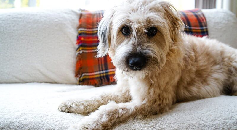 Pet-Friendly Cleaning Solutions
