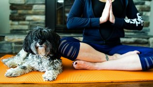 5 Ways to De-Stress With Your Dog