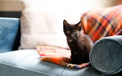 Kitten Season, Foster Homes Needed