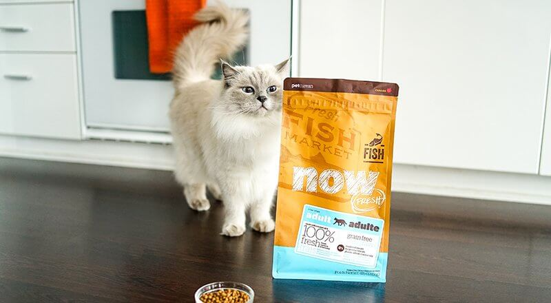 Potatoes in Pet Food with Cat and NOW FRESH food