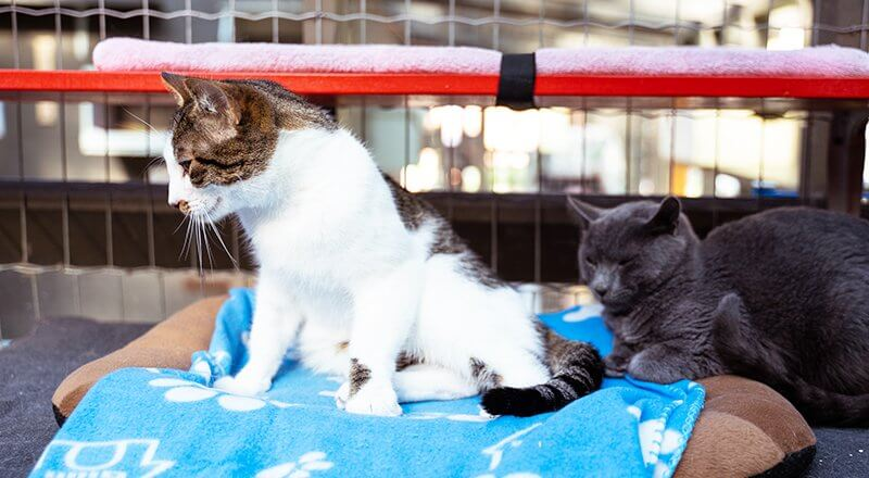What is a Bonded Pair of Cats